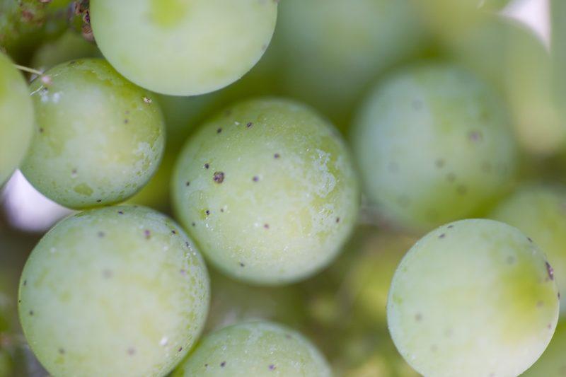vinification talbot
